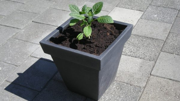 HD wallpaper flower pot with plant