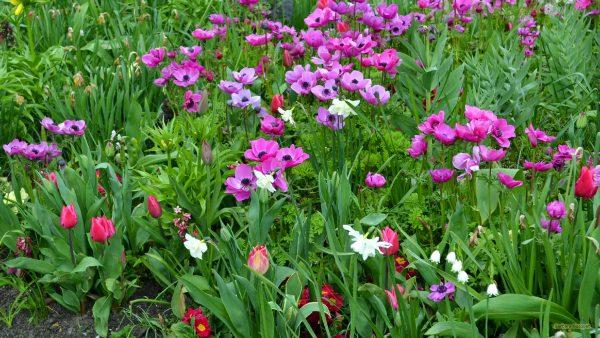 HD wallpaper purple spring flowers