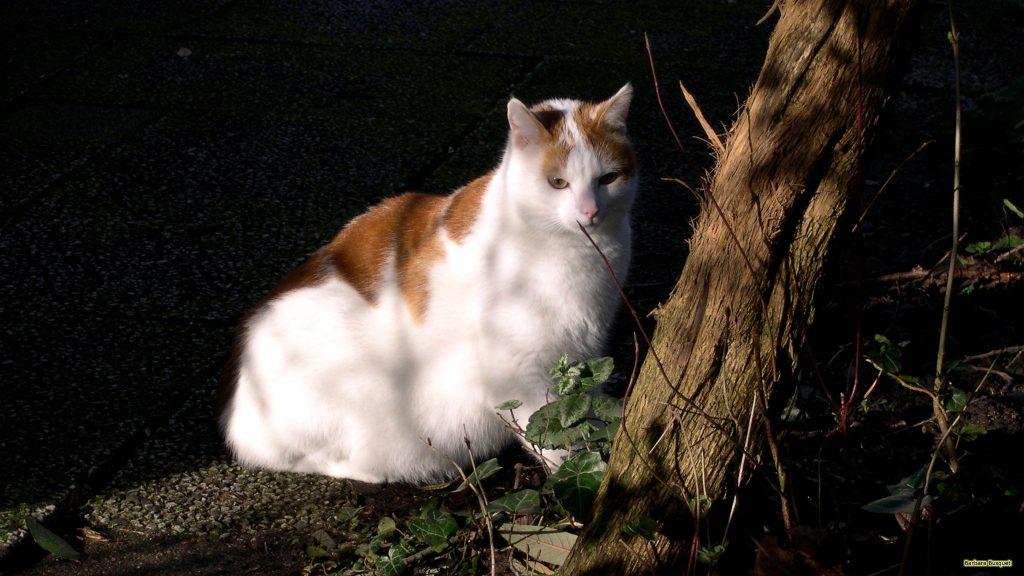 HD wallpaper red white cat near tree