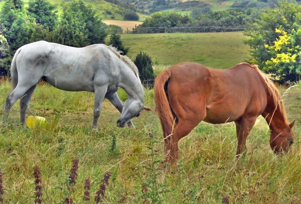 HD wallpaper with two horses
