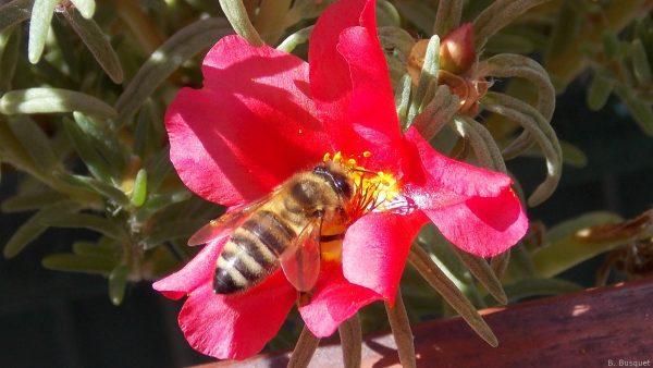 Spring wallpaper bee on flower