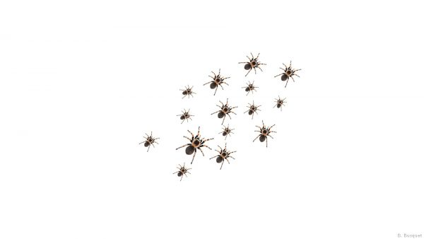 Wallpaper filled with spiders