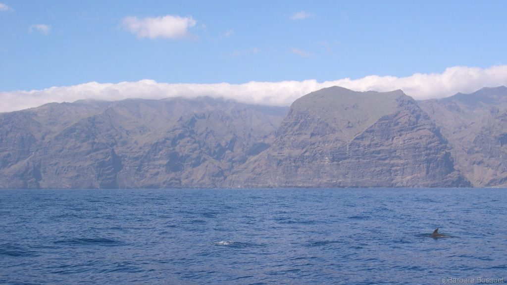 Coast with dolphins in Tenerife