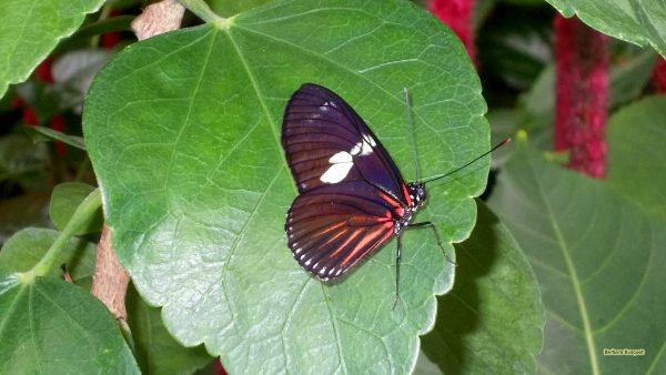 HD wallpaper black buterfly on a plant