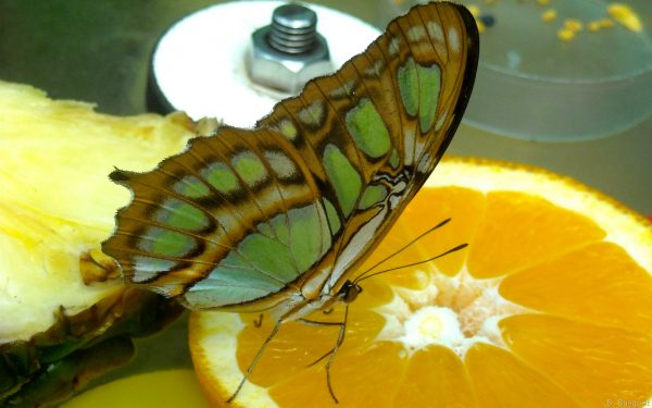 Photo with a butterfly on orange slice
