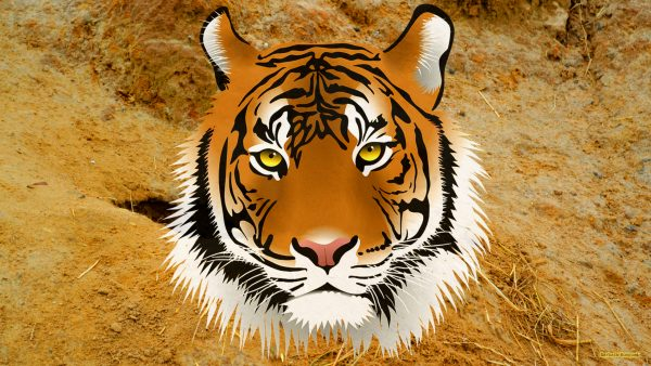 HD wallpaper with a tiger head