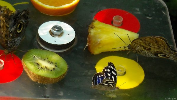 Picture with butterflies and fruits