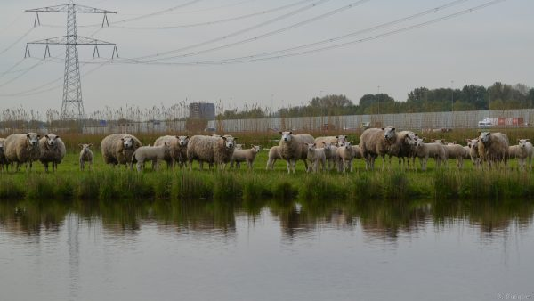 Herd near the water