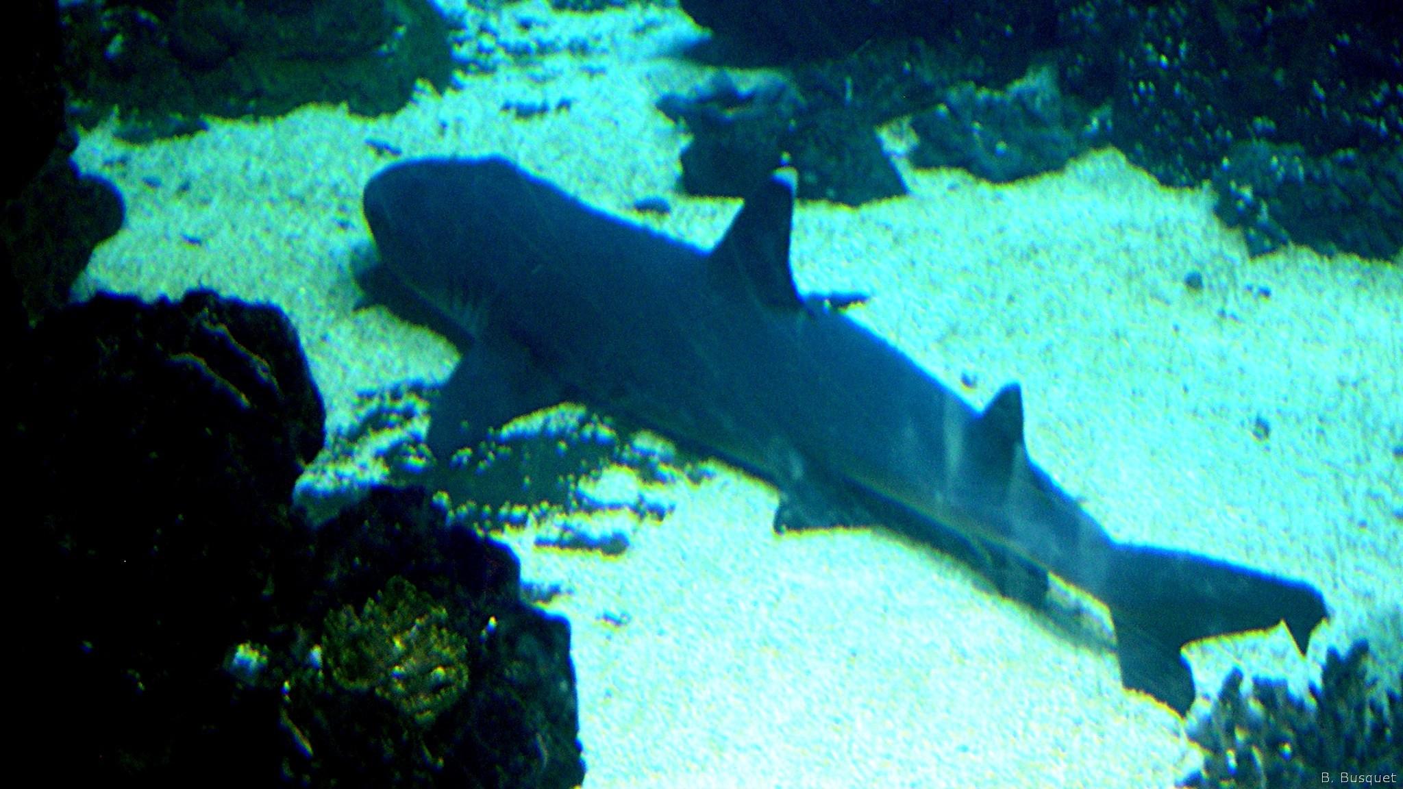 shark aquarium live wallpaper - photo #36