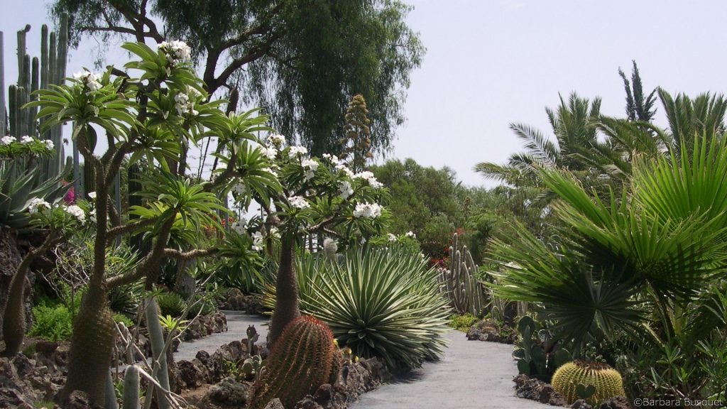 HD wallpaper garden in Tenerife