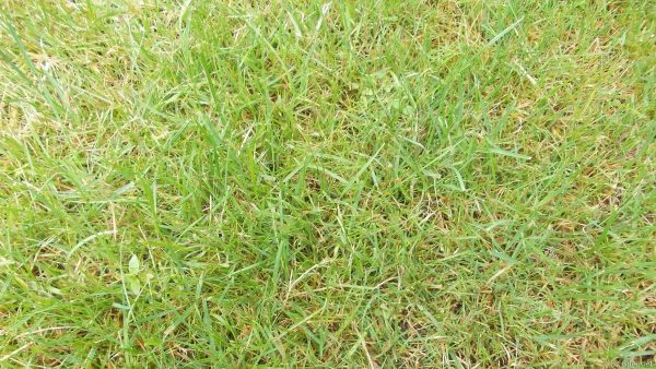 HD wallpaper with close-up of grass