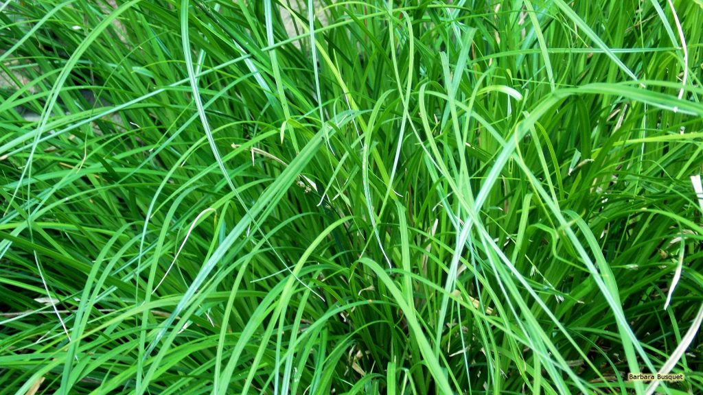 Wallpaper with tall grass