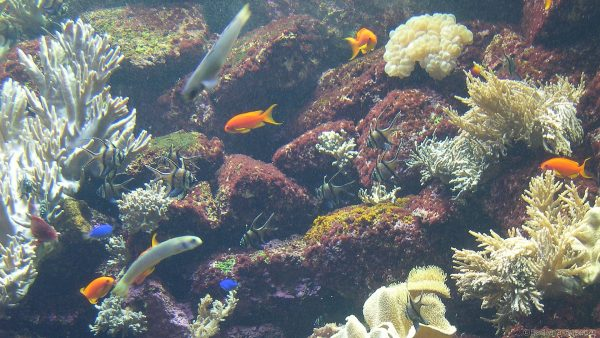 Aquarium Fish in Tenerife