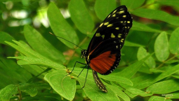 Desktop background black orange butterfly