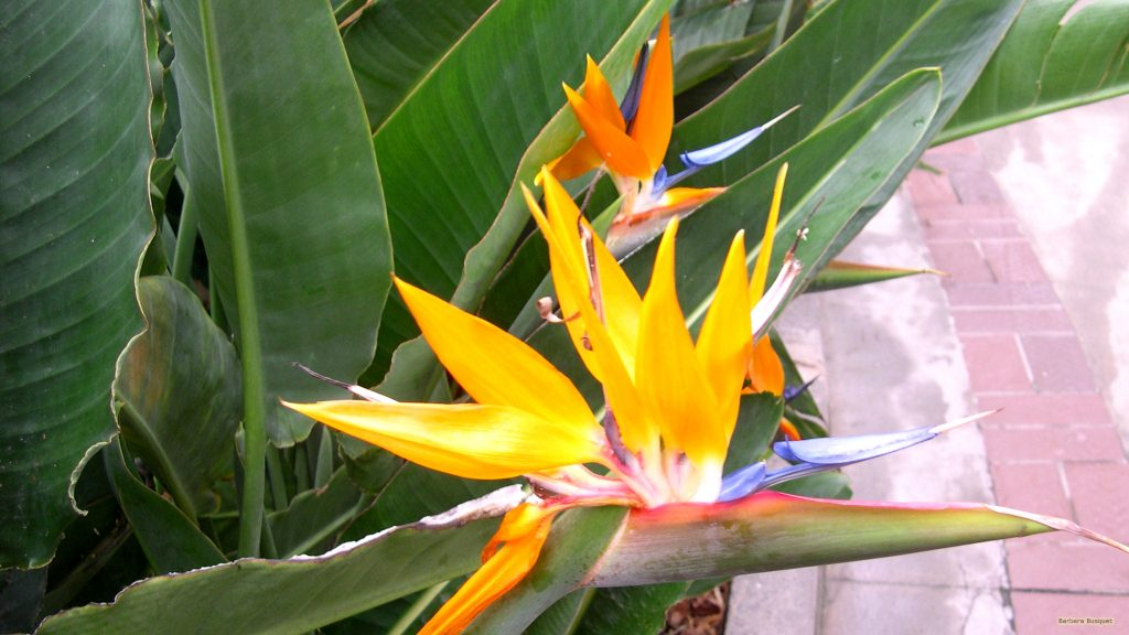 HD wallpaper orange tropical flower