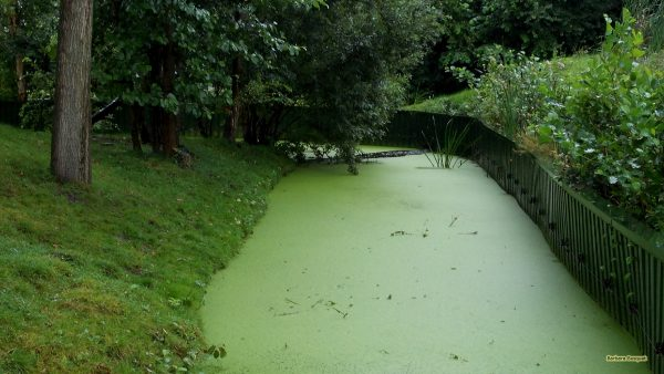 HD wallpaper ditch with duckweed