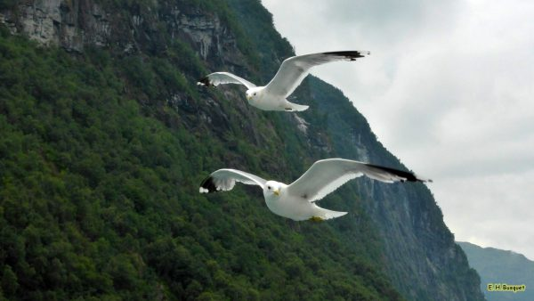 HD wallpaper seagulls outside the boat