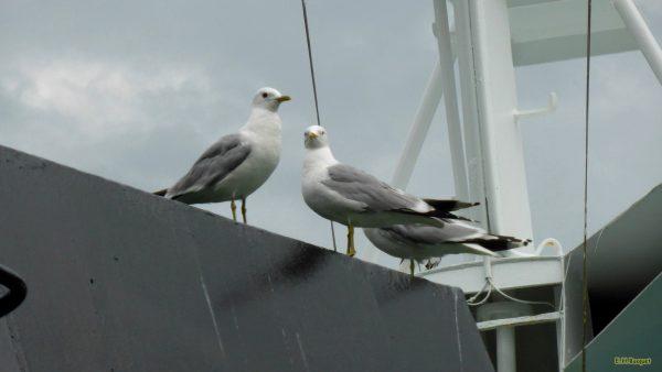 HD wallpaper with gulls