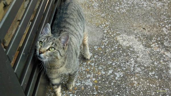Desktop background cat near door