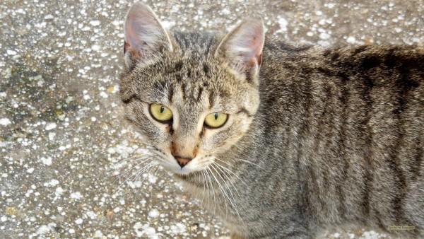 HD wallpaper close-up cat