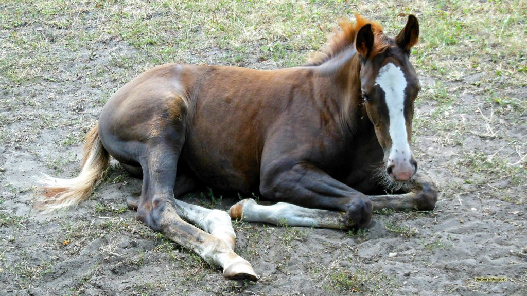 Horse wallpaper with brown foal