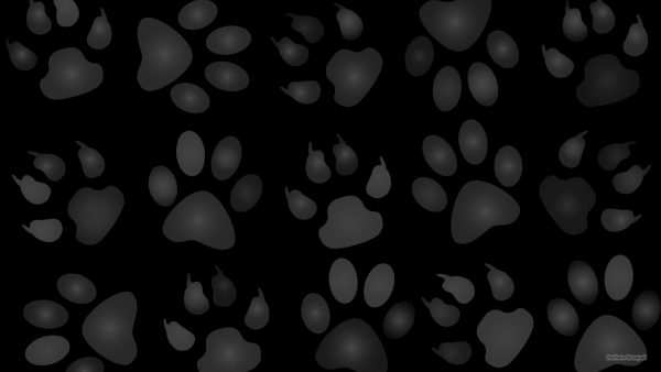 Black wallpaper with dog paws.