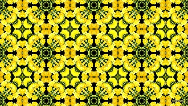 Wallpaper with kalanchoe pattern