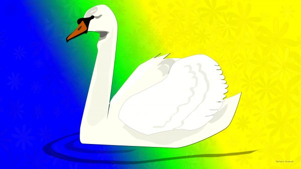 Colorful wallpaper with white swan