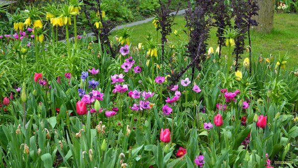 HD wallpaper flowers in the backyard
