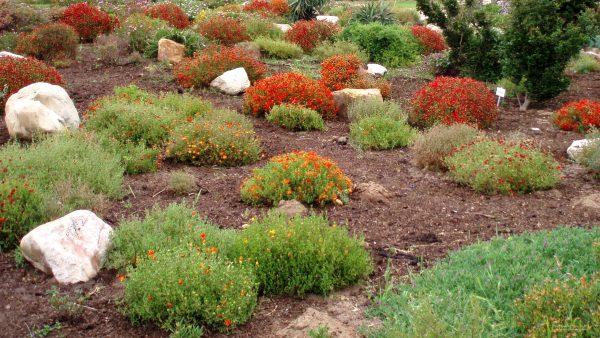 Garden in South Africa
