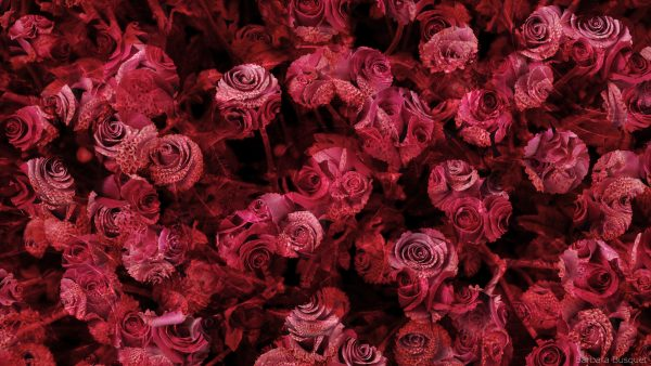 Abstract wallpaper with dahlia's and roses