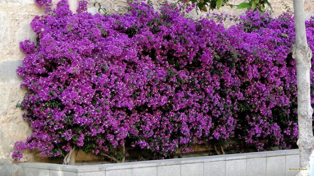 HD wallpaper bush with purple flowers
