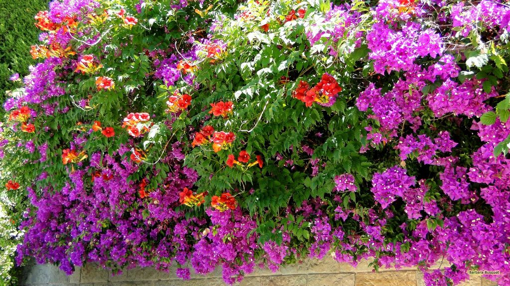 HD wallpaper with red and purple flowers at a wall.
