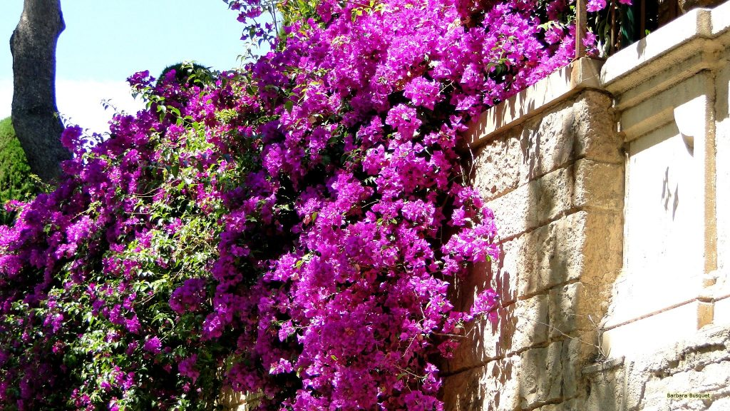 HD wallpaper with wall with purple flowers.