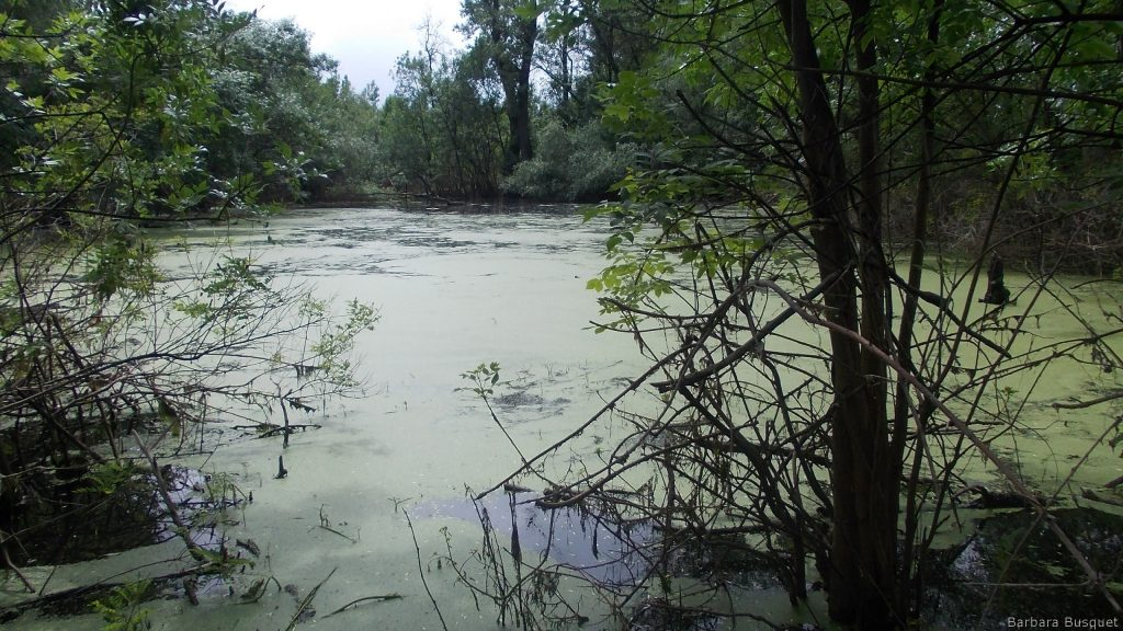 Wallpaper with swamp in Serbia