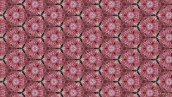 Pink roses pattern wallpaper