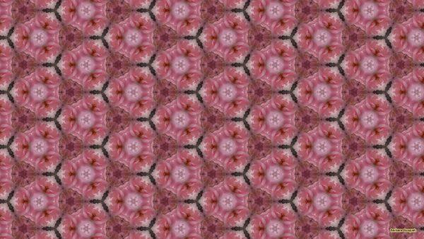 Pink roses pattern wallpaper