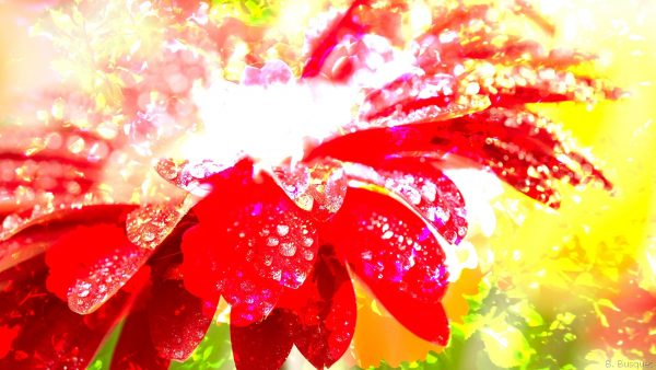 hd wallpaper with red sparkling flower