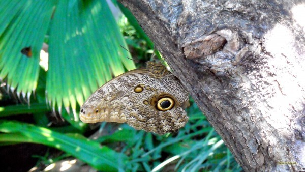 HD wallpaper owl butterfly on tree