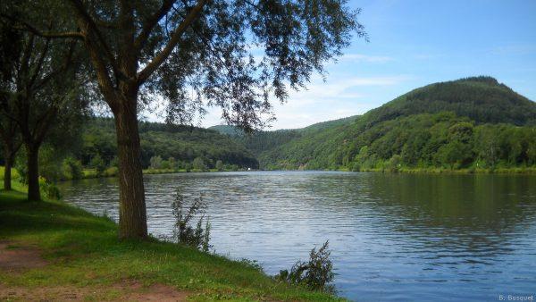 HD wallpaper trees on river banks