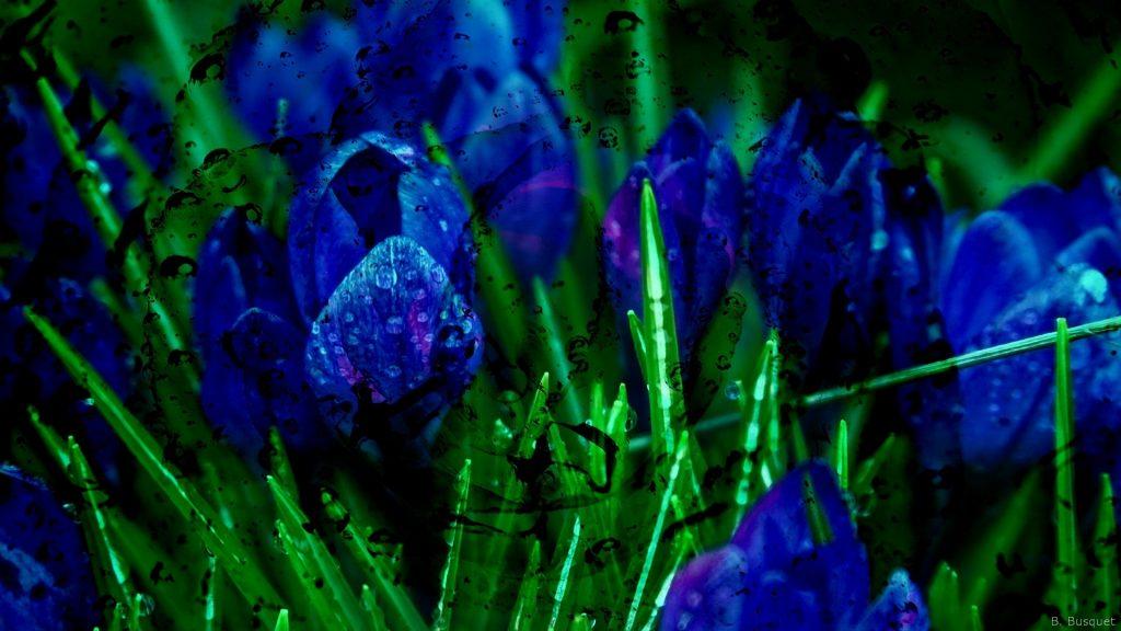 hd wallpaper green grass and blue flowers