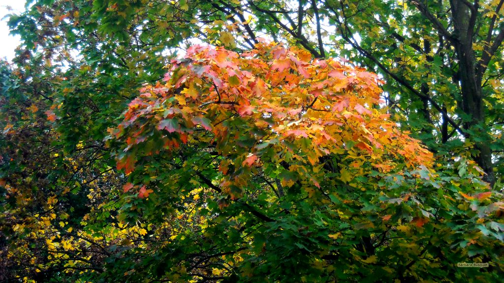 Fall wallpaper orange leaves on tree