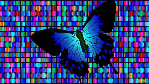 Squares and a blue butterfly.