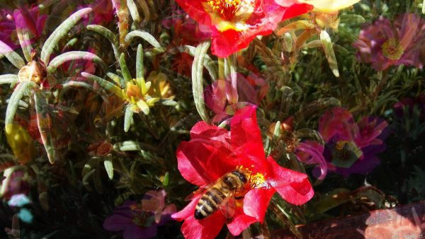 Nature wallpaper flowers and bee