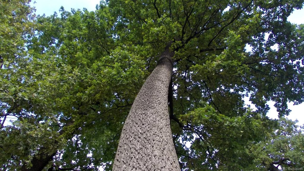 Nature wallpaper tree viewed from ground