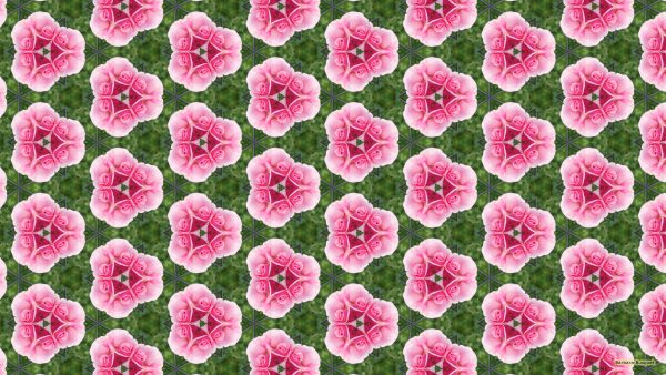 Pattern wallpaper pink rose and fence