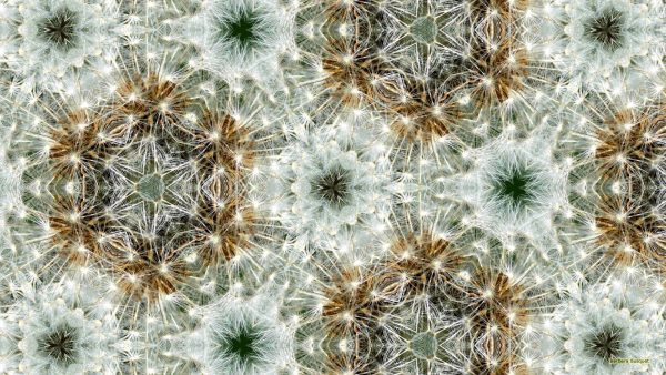 dandelion pattern wallpaper