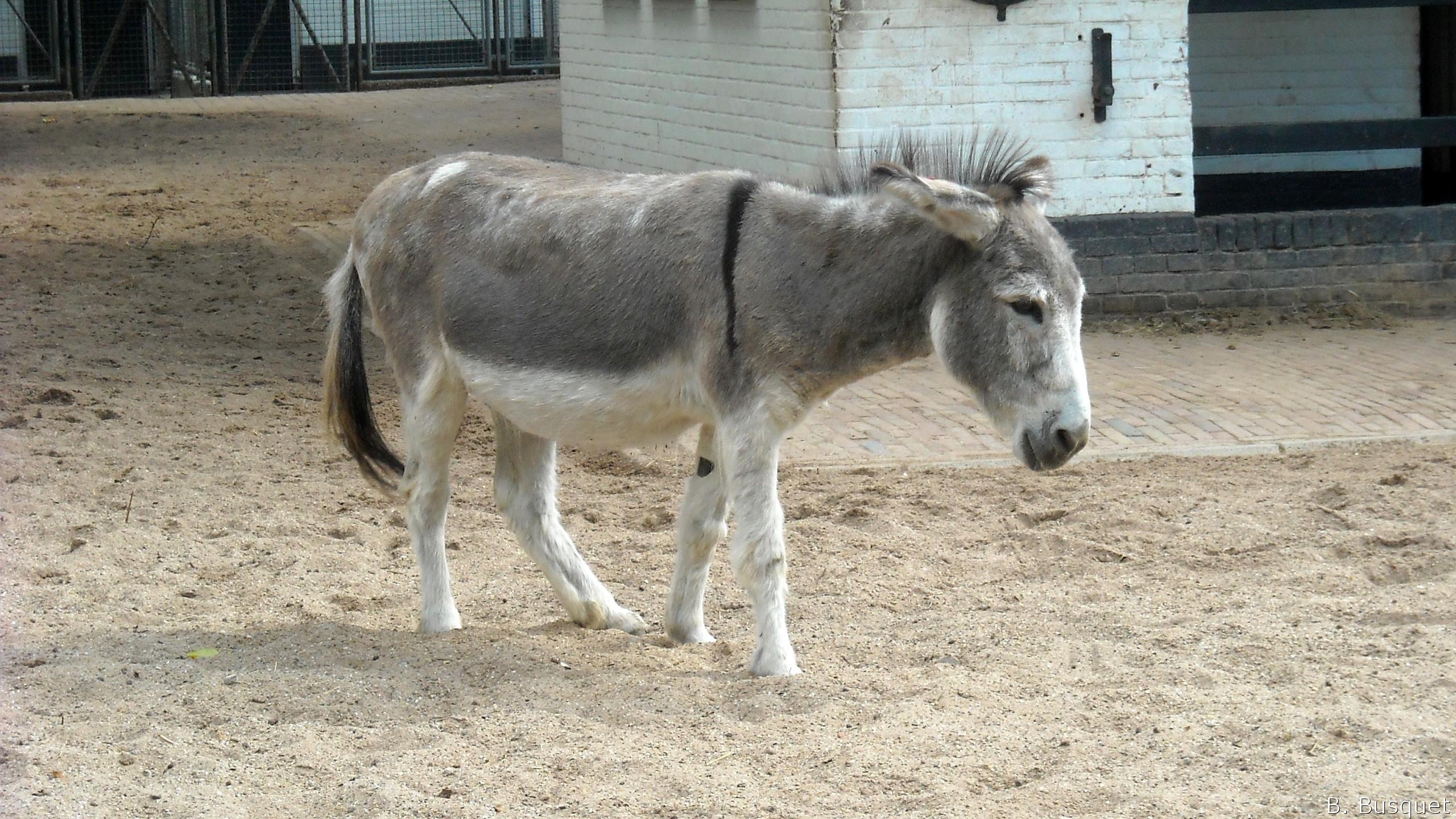 The Legend of the Donkey s Cross - Jesus rode into Jerusalem on Pictures of donkeys backs