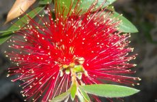 Close-up photo red flower