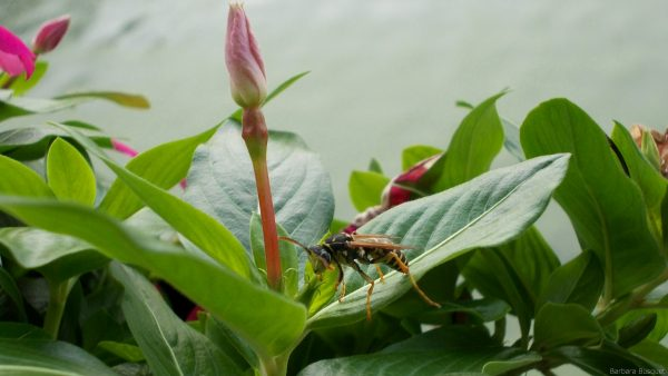 Wallpaper with wasp on flower